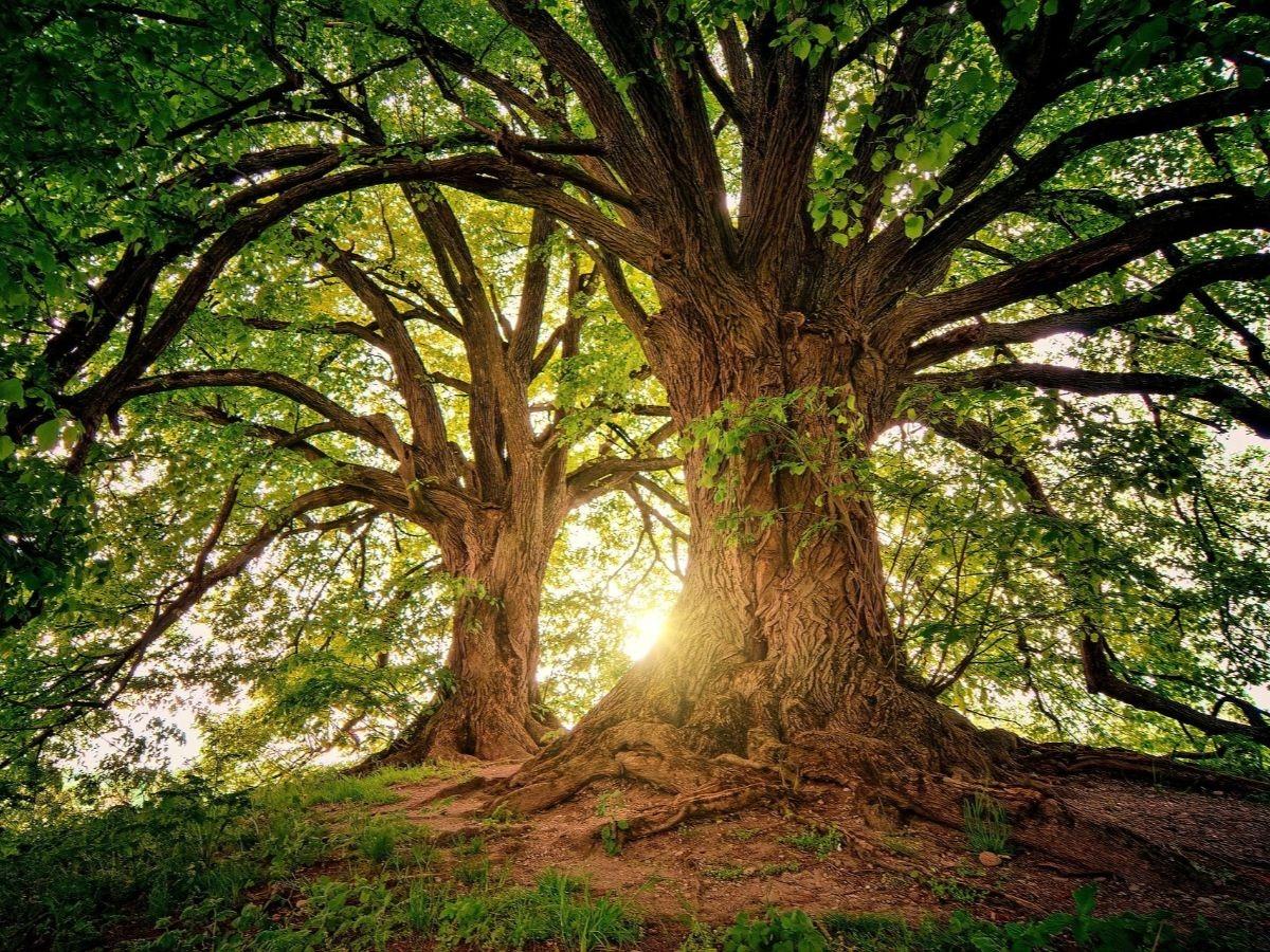 tree_1200x900
